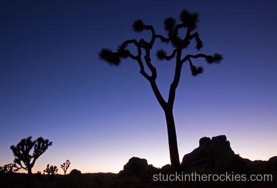 J Tree & Red Rocks