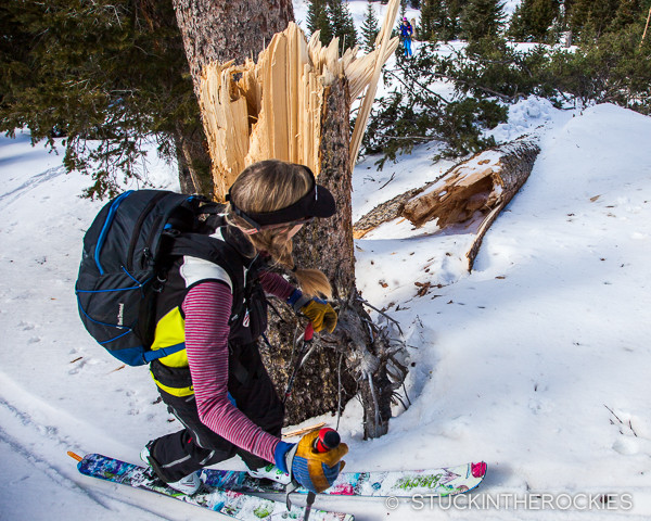 The recent wind that came in a few days earlier registered at 110 mph at the top of Snowmass. We saw a lot of big trees that were downed as a result.