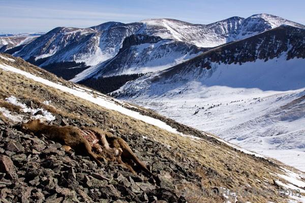 San Luis Peak, Yawner Gullies,