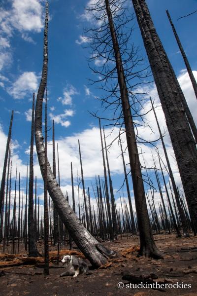 West Fork Complex Wildfire15