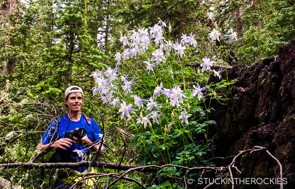 Columbines by Brush Lakes