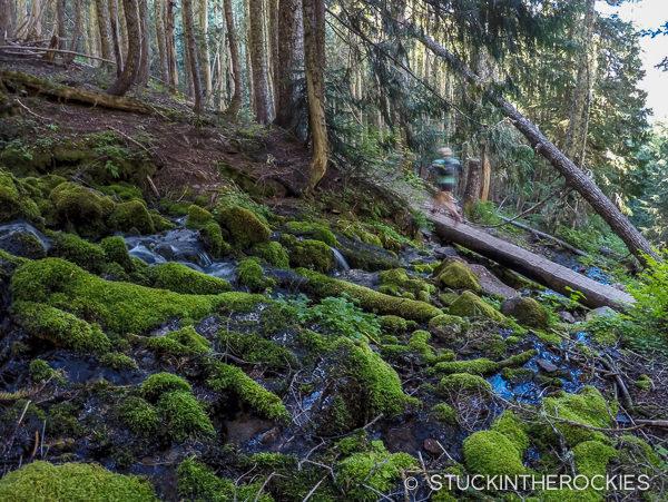 Christy Mahon running the Wonderland Trail
