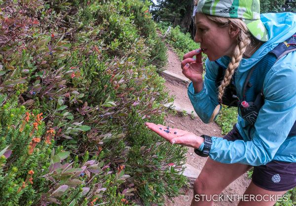Christy Mahon picking wild blueberries along the trail