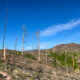Jemez Mountain 50k